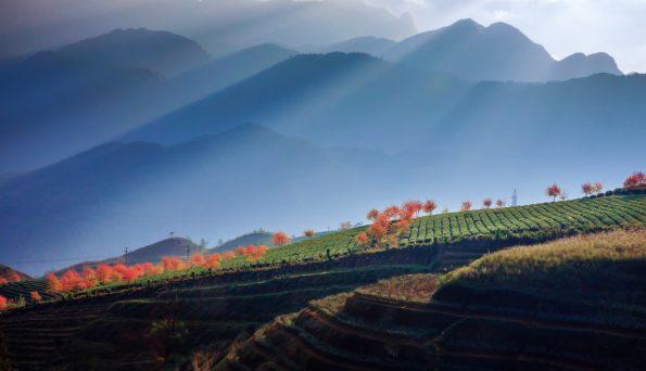 9 Sunset tea hill
